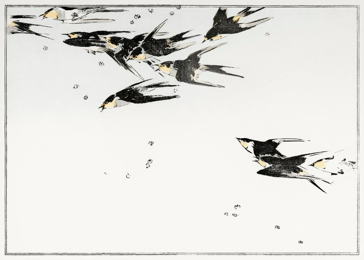 Flying magpies, illustration from Seitei Kacho Gafu (1890–1891) by Wantanabe Seitei, a prominent Kacho-ga artist.