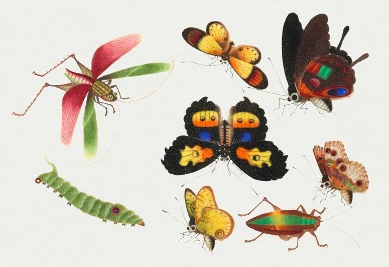 diverse farfalle