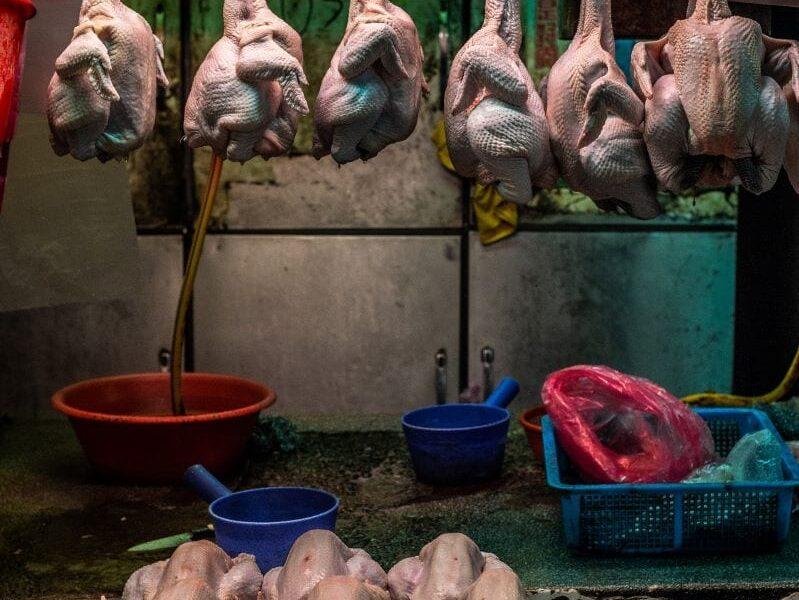 polli uccisi