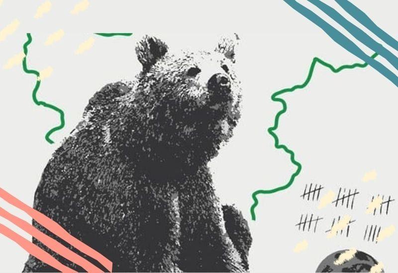orso trento