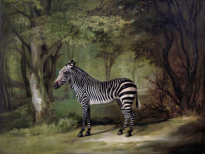 Zebra nel bosco
